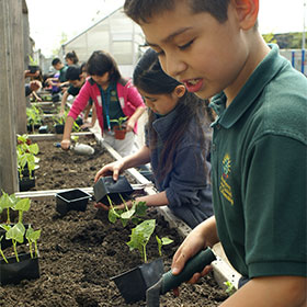 Organic Garden Box